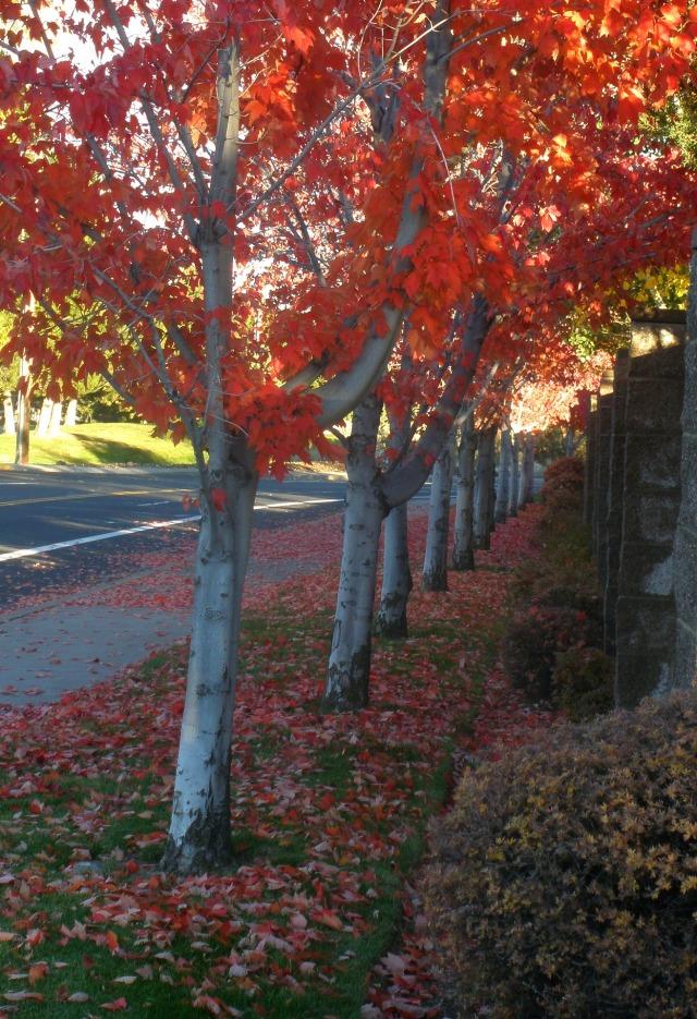 autumn-in-my-town